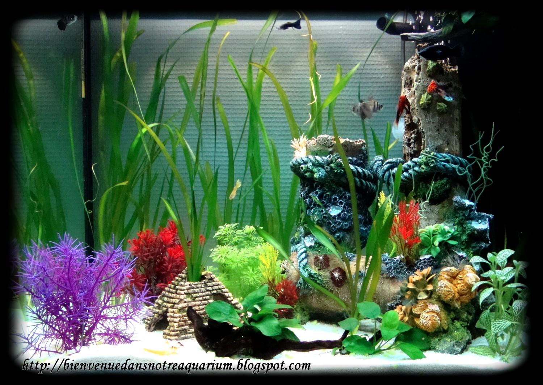 bienvenue dans notre aquarium 24 sept 2010. Black Bedroom Furniture Sets. Home Design Ideas