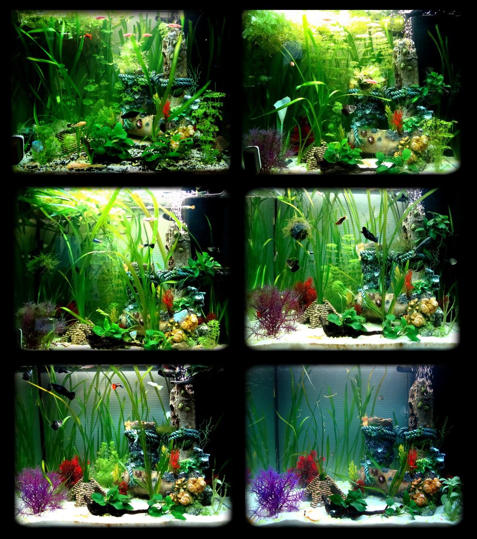 bienvenue dans notre aquarium evolution d 39 un aquarium communautaire bien plant. Black Bedroom Furniture Sets. Home Design Ideas