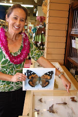 HAWAII'S STATE INSECT: PULELEHUA (Kamehameha Butterfly)