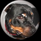 Rottweileren Aica sin gamle hjemmeside