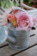 Austen roser i hagen