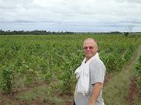 Acacia mangium plantation