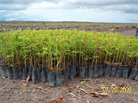Seedlings from nursery in bags