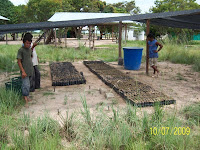 Native Tree Nursery