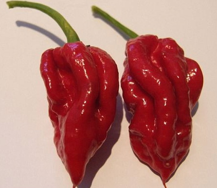 Naga Viper pepper