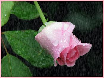 Visto-me de flor, para ficar em sua mão e perfumar o seu dia.