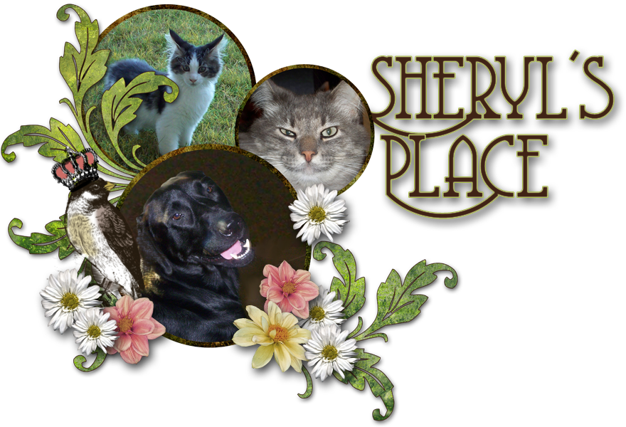 Sheryl's Corner