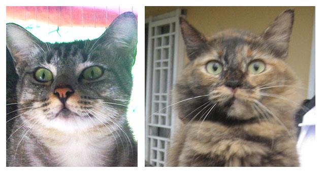 Kisah Kucing Siam Bernama Nyet My Dearcats Dc
