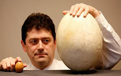 ไข่ ใหญ่ที่สุดในโลก