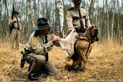 สุนัข จมูก ดีที่สุดในโลก
