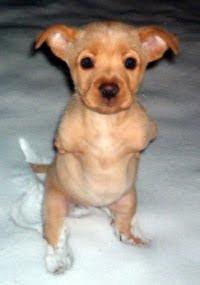 เฟธ สุนัขสองขา สู้ชีวิต ในวัยเด็ก