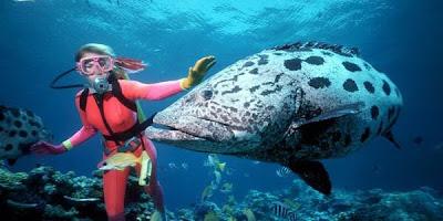 ปลาหมอทะเลตัวใหญ่