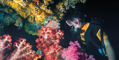 ปะการังอ่อนหลายสี ที่แสนงดงาม