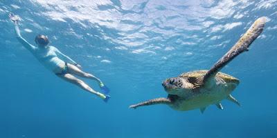 เต่าทะเลเขียว(Green sea turtle)