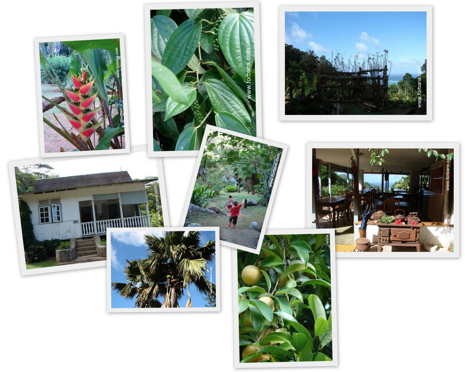 Jardin du roi anse royale seychelles seychelles for Villa jardin seychelles