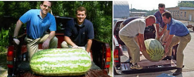 World's Largest Watermelon (268.8 Lbs or 122 Kg)
