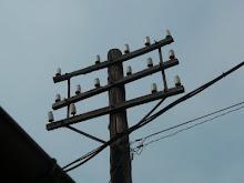 通信ねじ切がいしカップというがいし類を大量に取り付けた明治時代の電柱?!(現存せず)大昔は国鉄の線路脇によくあった。だが、ここに線路があったような形跡はない。