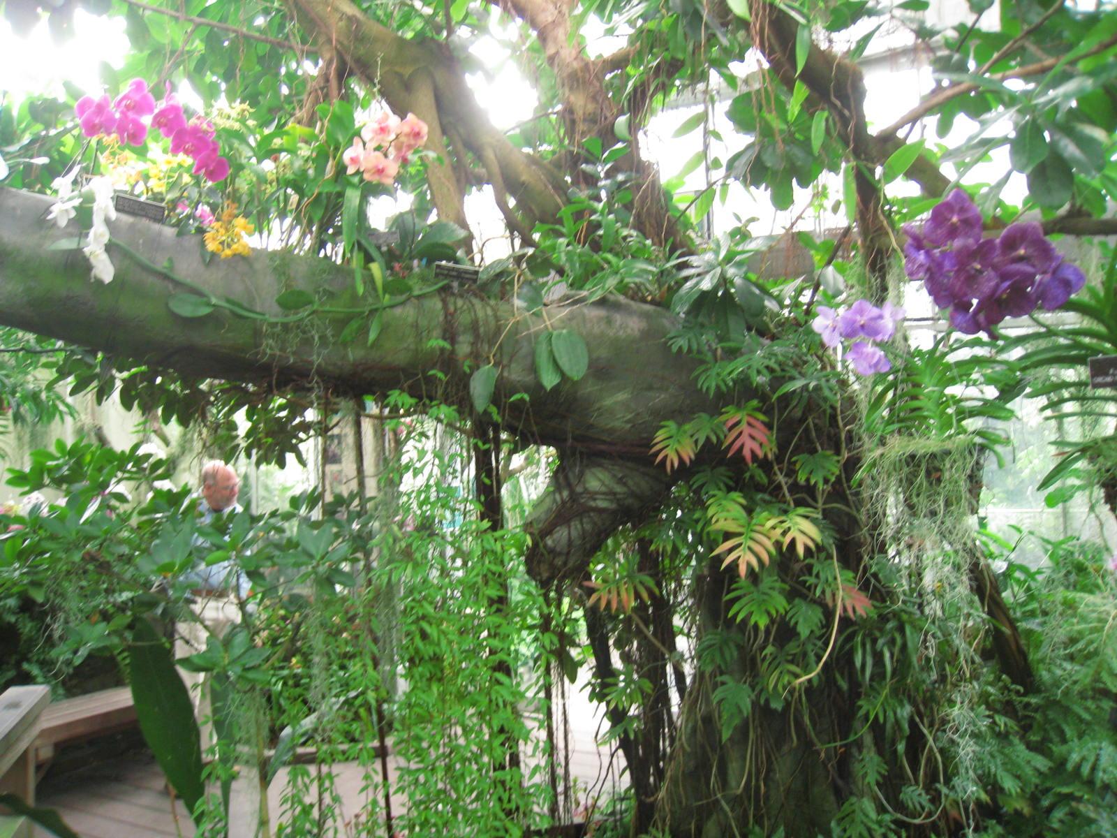 The World 39 S Best Gardens National Botanic Gardens Washington D C