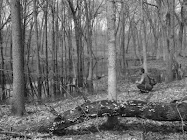 A woody swampy area in northern Indiana