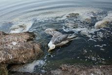 Ο Θάνατoς σε περιμένει στη λίμνη Κουμουνδρούρου