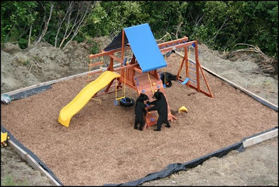 Bears in a play area