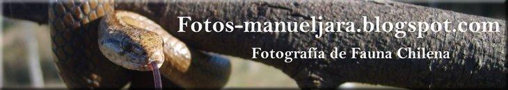 Fotografia de fauna chilena