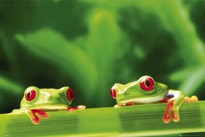 Two Frogs in Love a Story of Two Frogs
