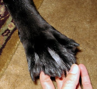 Breed Of Dogs That Have Fur On Toes