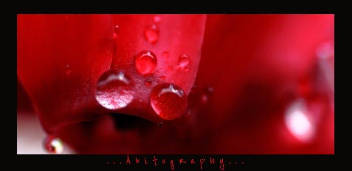 Abitography