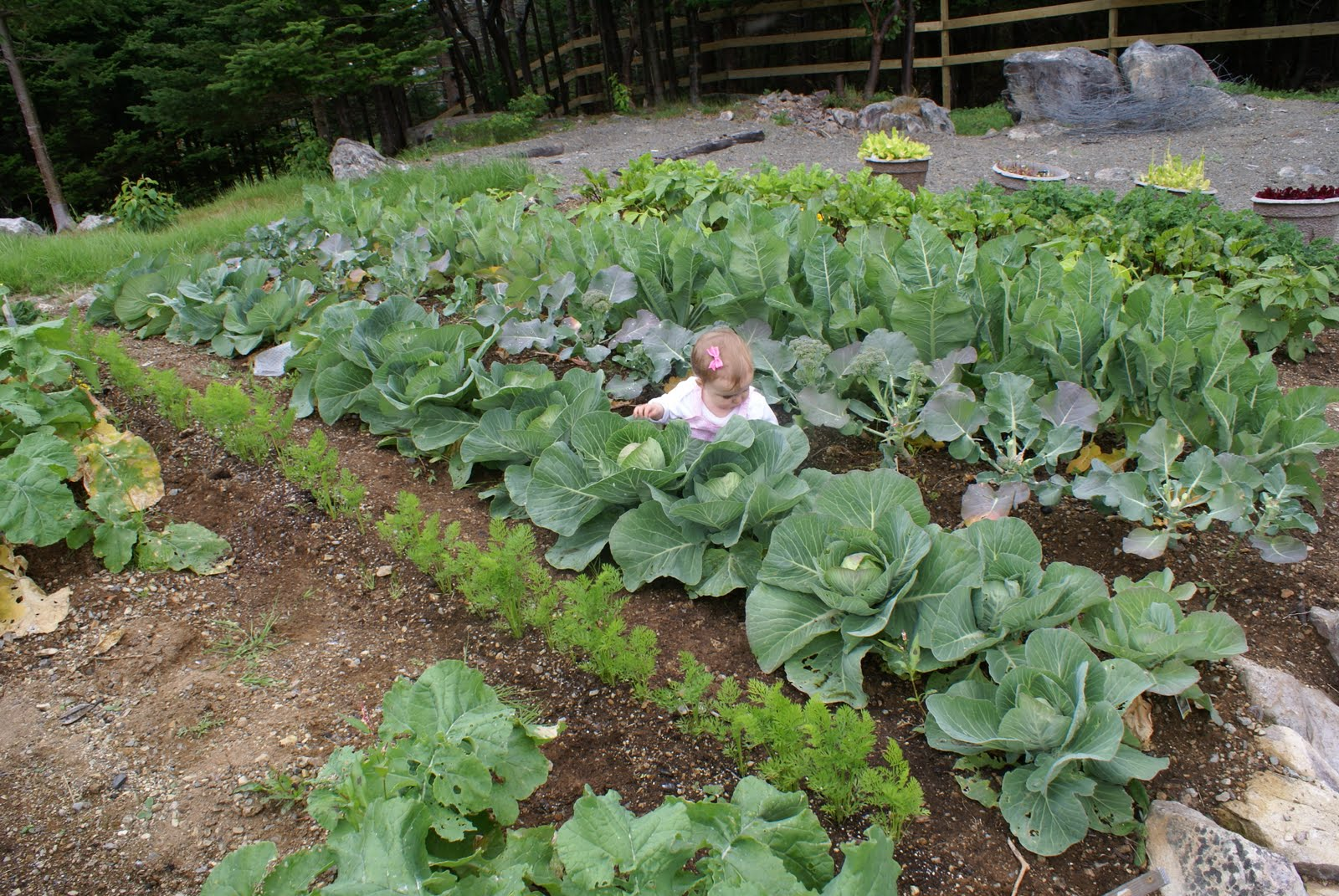 how to make a vegetable patch in your garden
