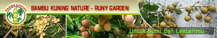 BAMBU KUNING NATURE - RUNY GARDEN