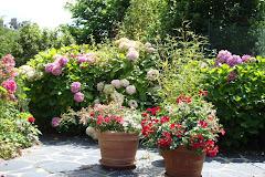 mon jardin été 2009