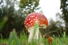 champignon joli!mais pas bon