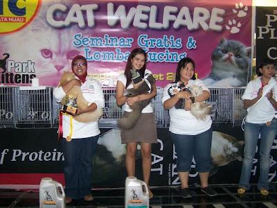 Surabaya Cat Lover: Mengapa memilih kucing persia?