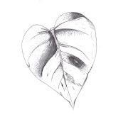 Em uns dos trabalhos de desenho de observação, era desenhar uma folha, . (folha ajustes)