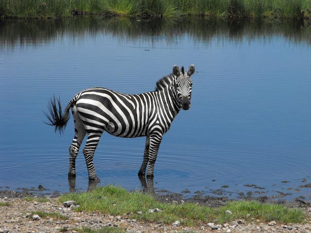 8 decembre - Retour de Safaris