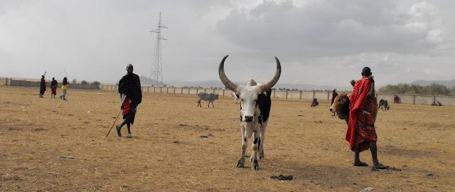 3 decembre – Revenons aux vaches