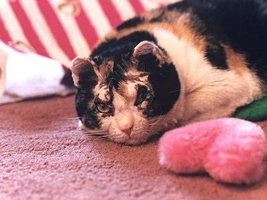 Кошатинские - Страница 5 Cat_scarlett