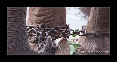 Мужчины закованные в цепях фото 12-513