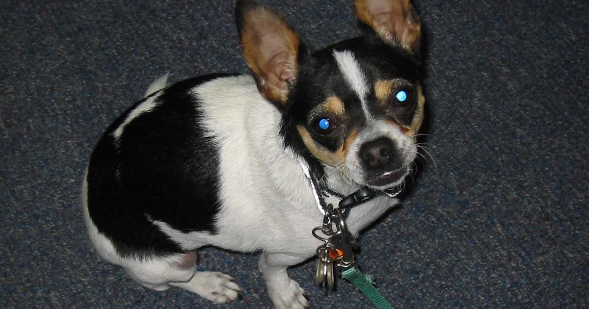 Image Result For Dog Training Certification