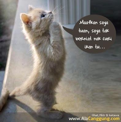 aksi Lucu Meow2