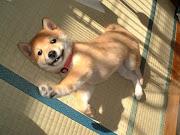 Cachorro com regulador de volume