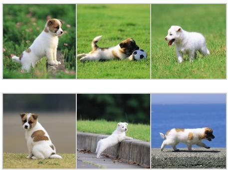 Estos wallpapers de perros los podemos descargar gratis y utilizarlos ...
