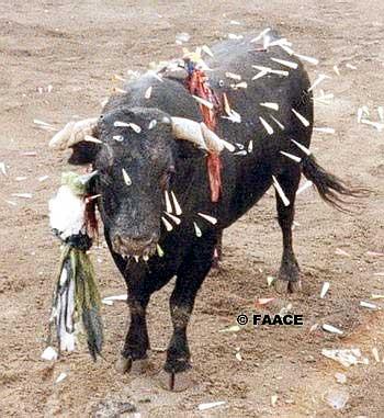 prohibicion corrida de toros