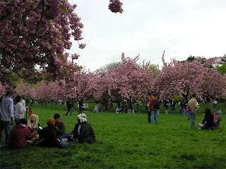 Trees and anime fans at the Cherry Blossom Festival