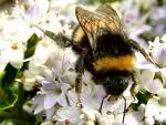 [bee]