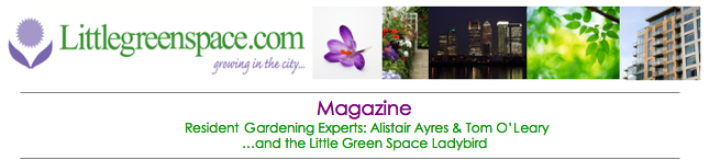 Little Green Space - Magazine