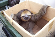 . looked at sloth pictures on google while listening to classical music.