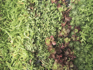 Health Herbs Harmony Nature Way