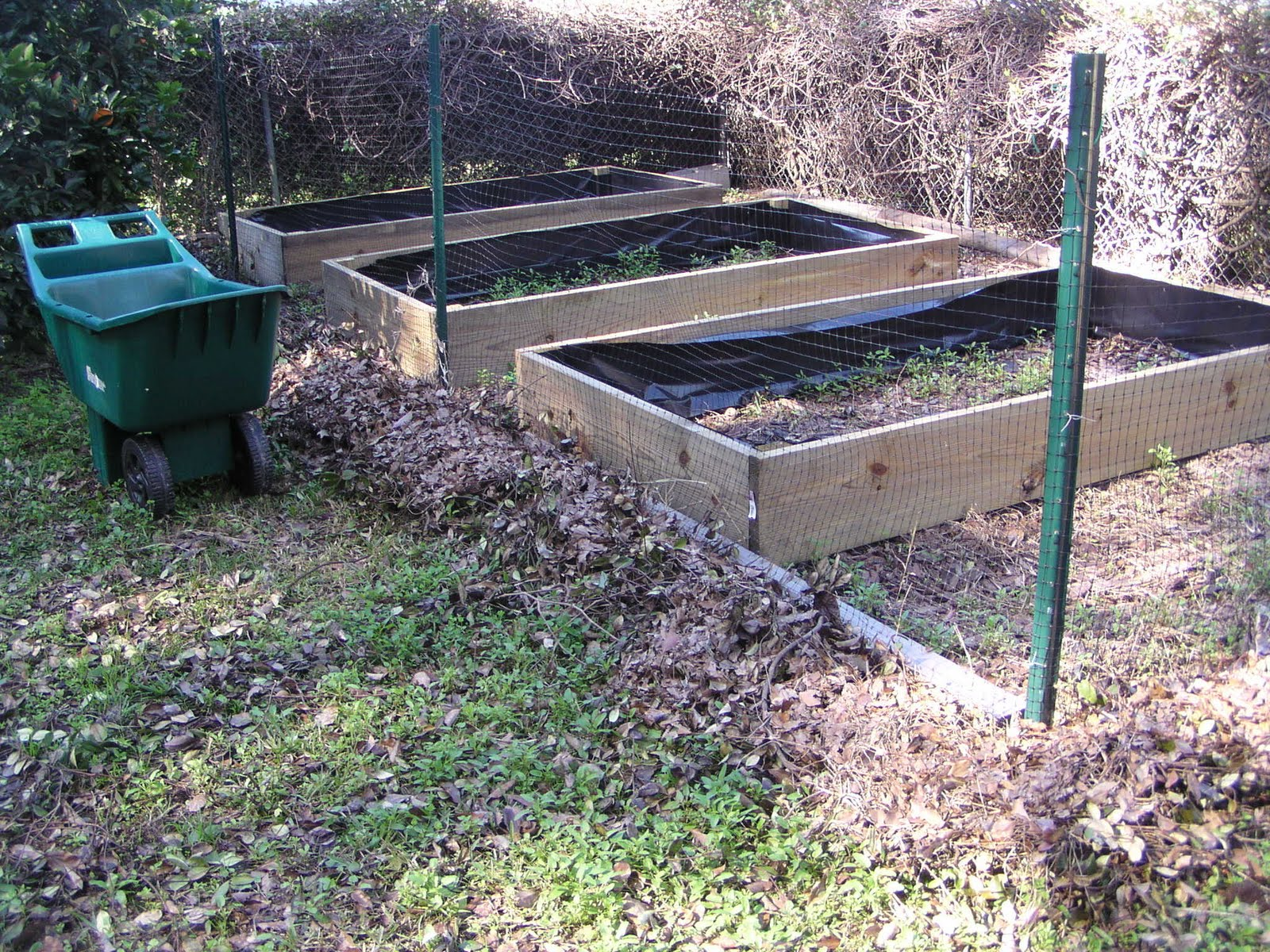 Florida gardening zone 9 three 4 x 8 raised beds - Pressure treated wood for garden beds ...